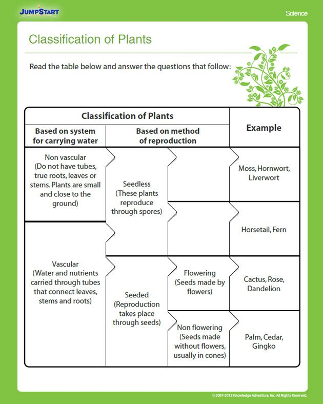 provide an example of a non-seed non-vascular plant